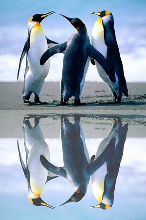 Efecto reflejo en tus imágenes con Mirror effect